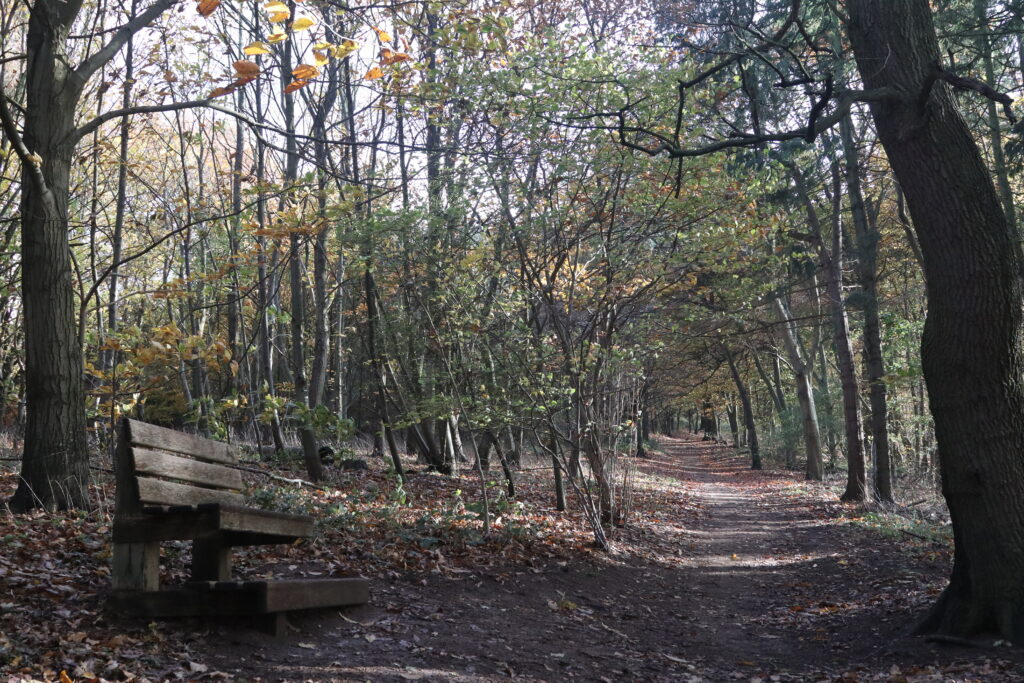 Chantry woods