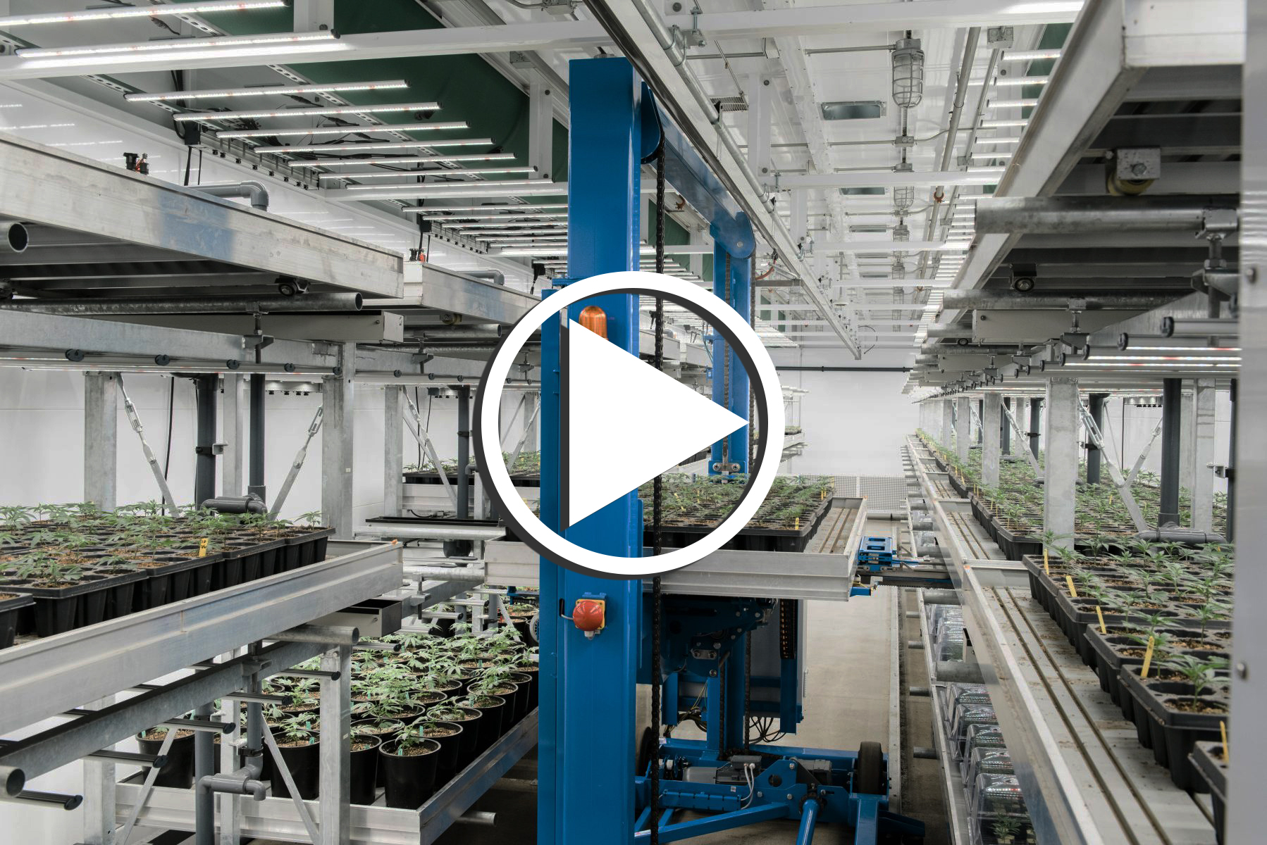 Webinar: Designing and Building for a Future in CBD & Hemp