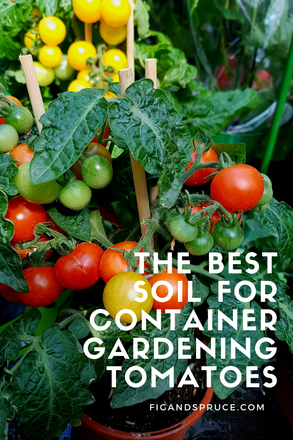 The Best Soil for Container Garden Tomatoes
