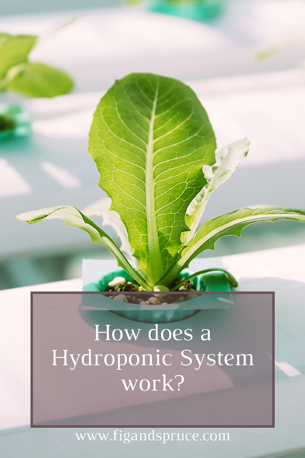 How Does a Hydroponic System Work?
