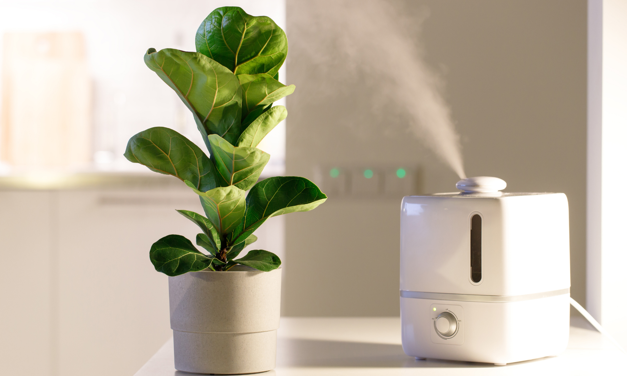 The Best Plant Humidifier for Your Indoor Plants