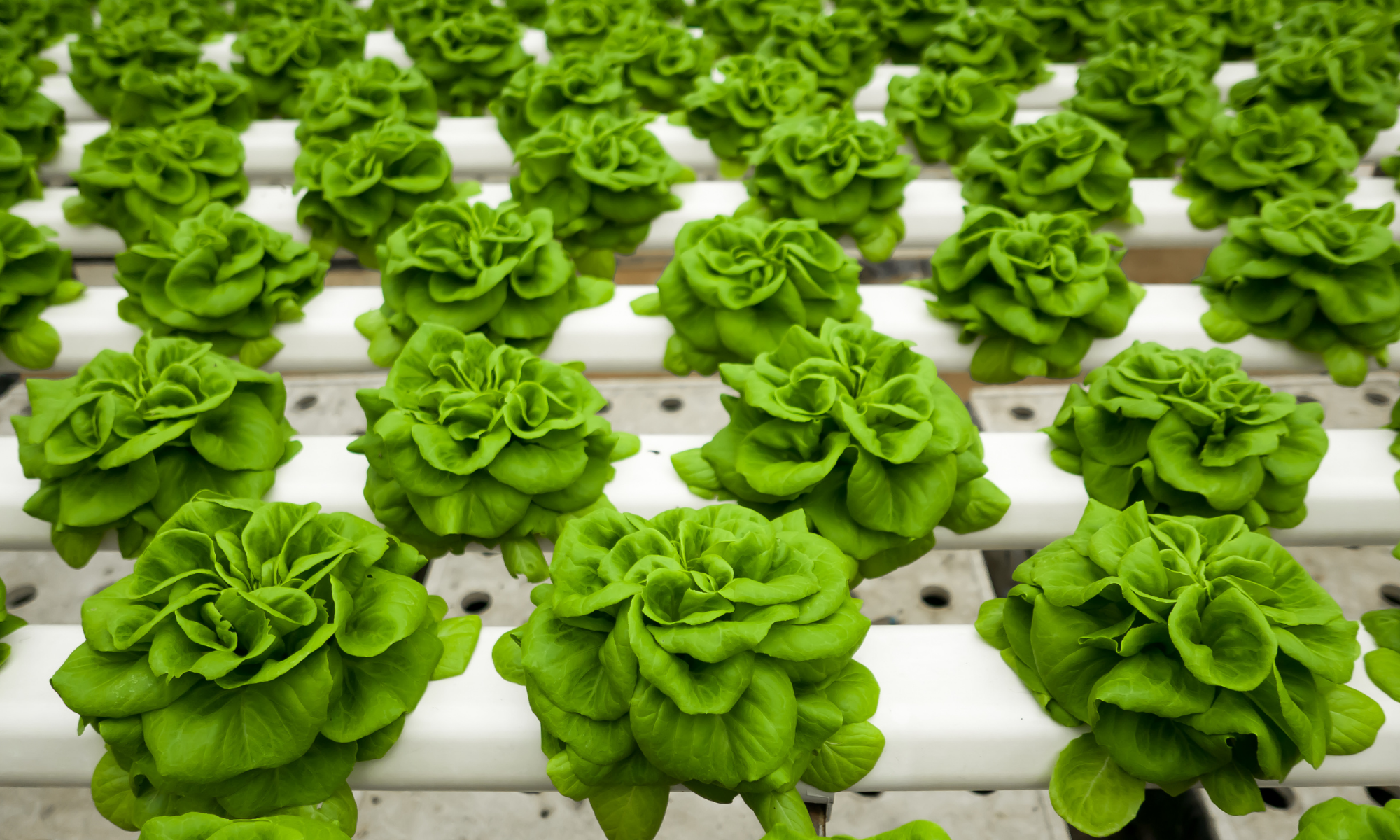 The Best Hydroponic Fertilizer – A Complete Buyers Guide