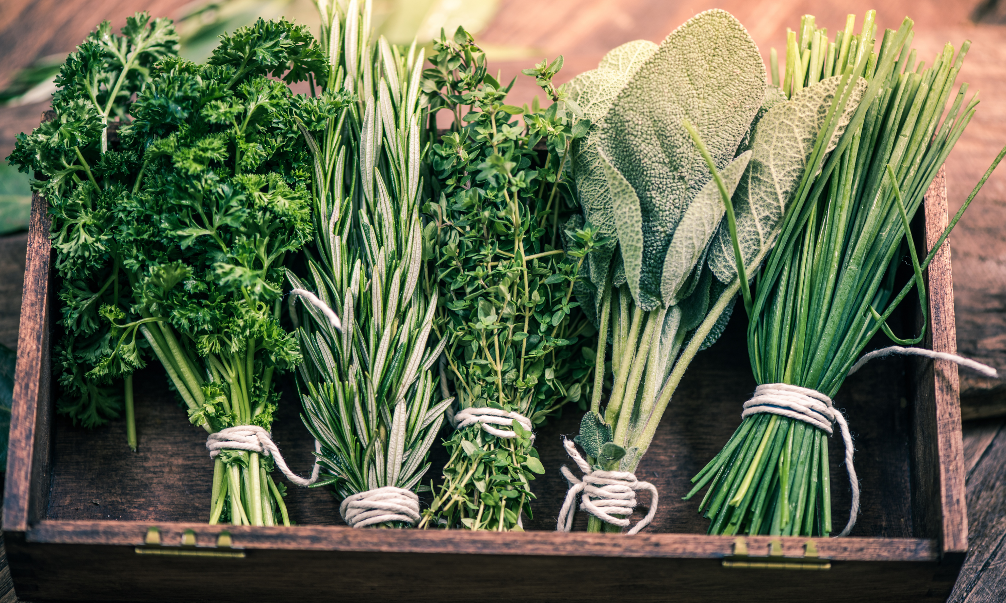 How to Start an Herb Garden on Your Balcony