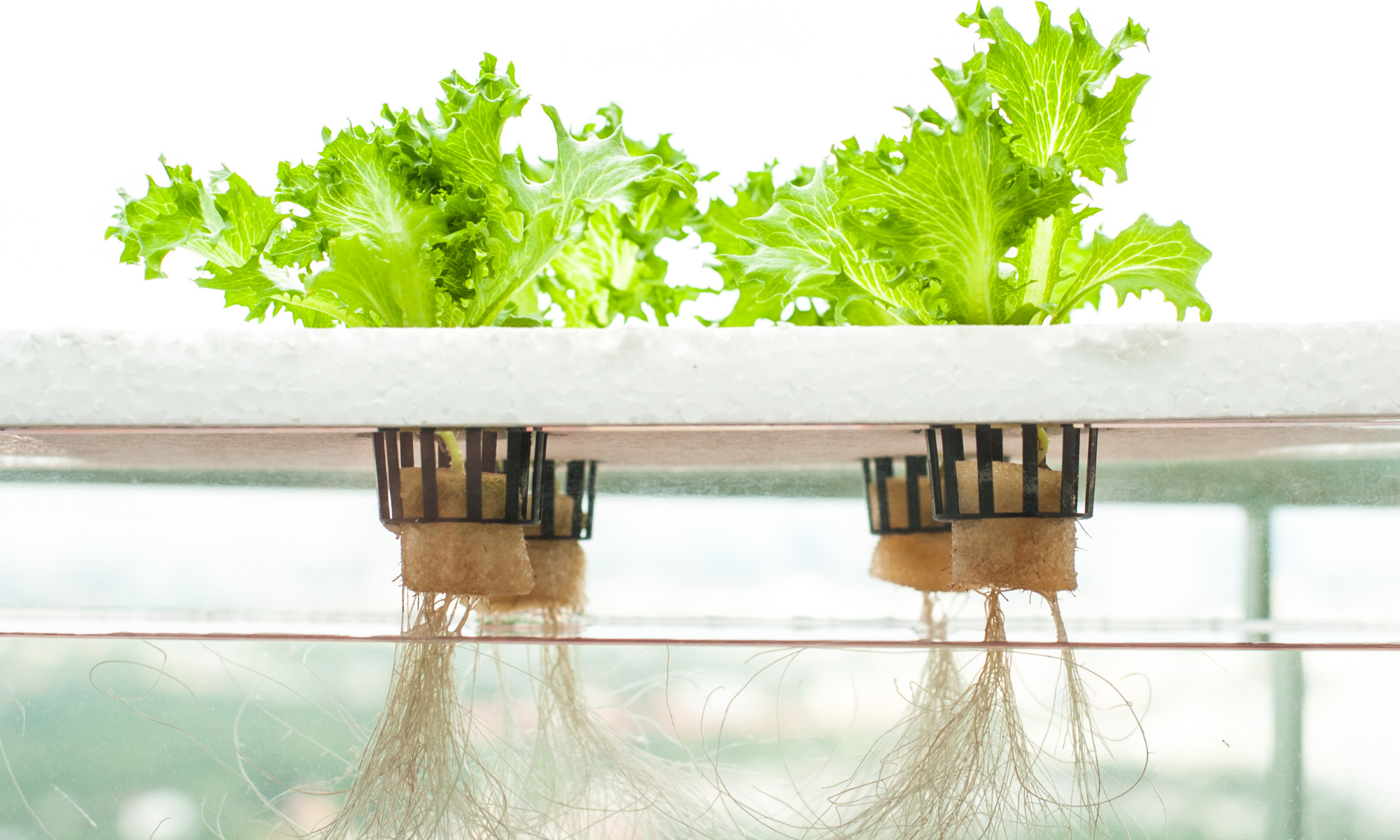 Is a Hydroponic Garden Cost Effective?