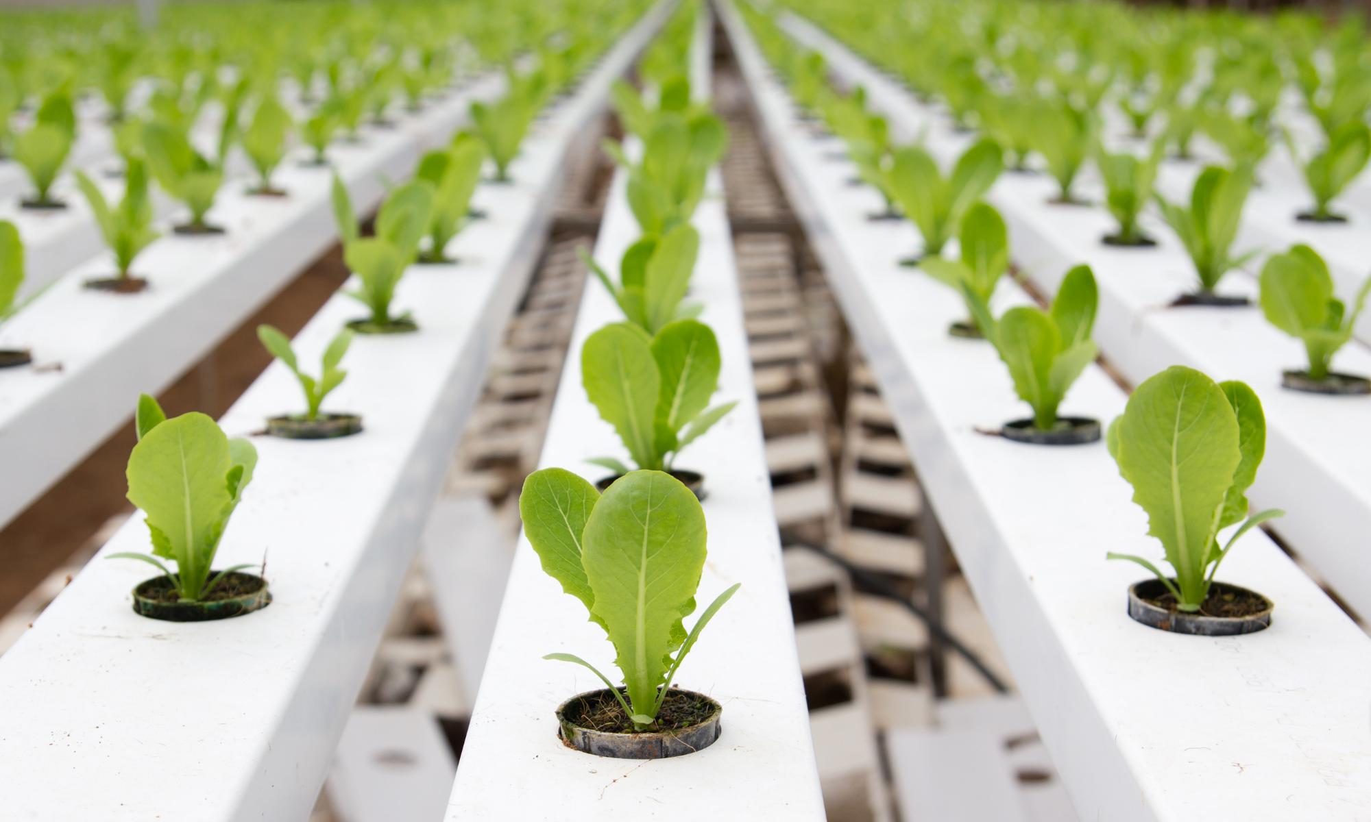 How to Use Rockwool in Hydroponics