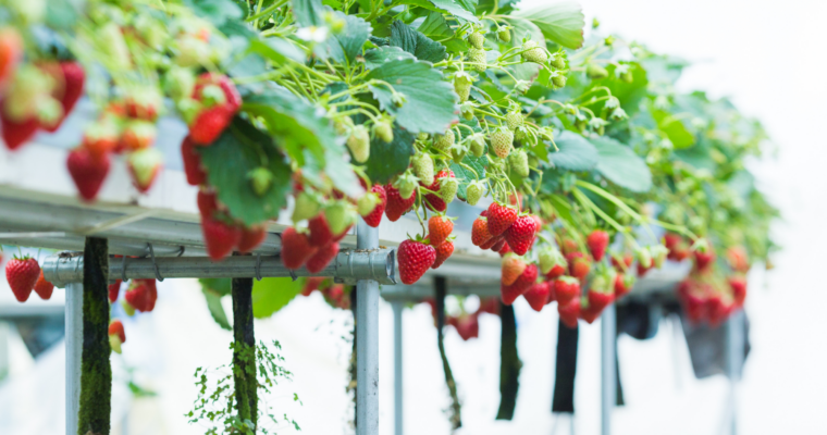 How to Reduce pH in Hydroponics