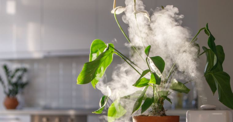 5 Types of Plants that Need a Plant Humidifier