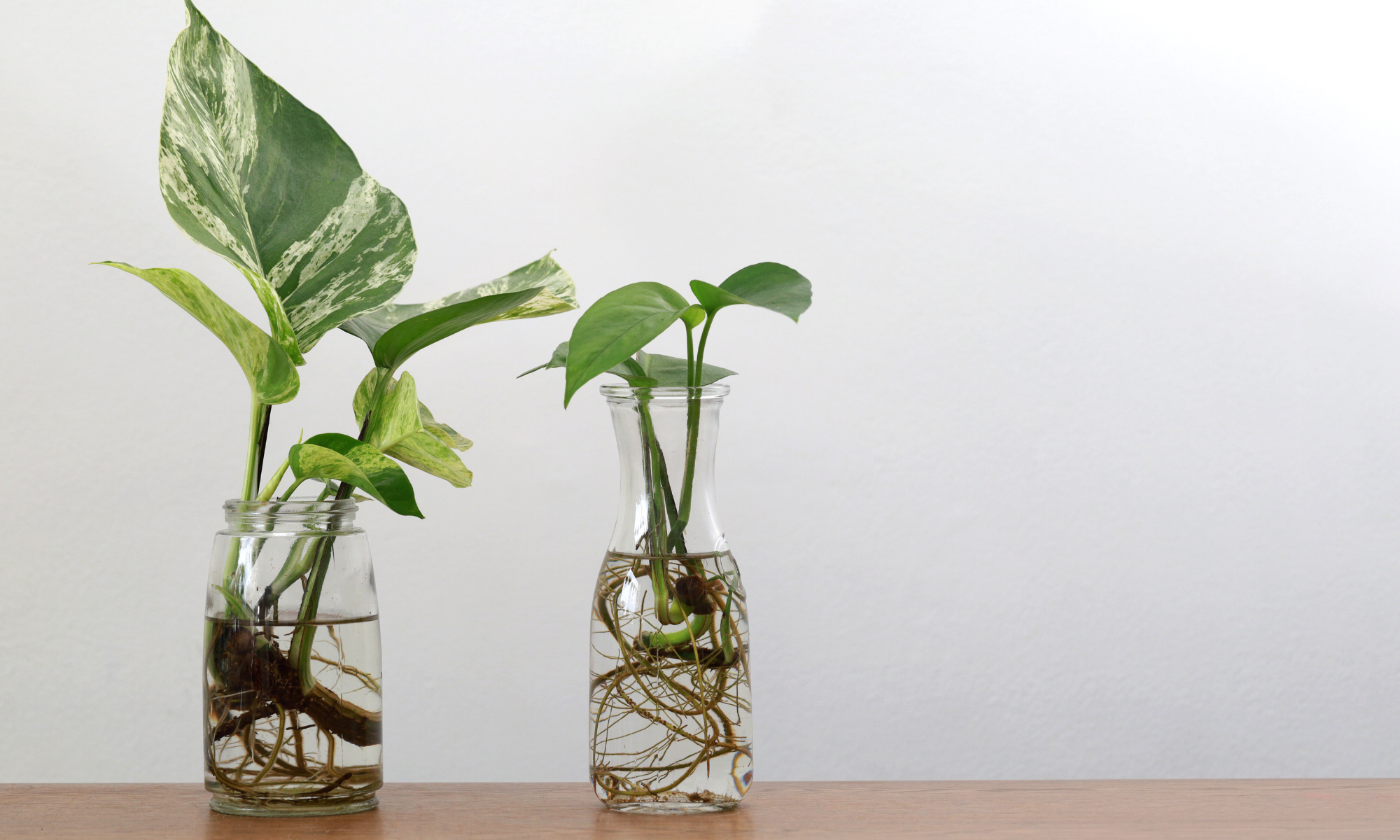 The Best Rooting Hormones for Propagating