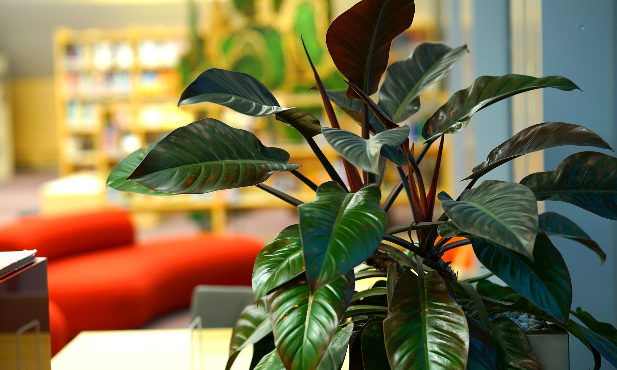 6 Types of Indoor Plants that Clean Air and Remove Toxins