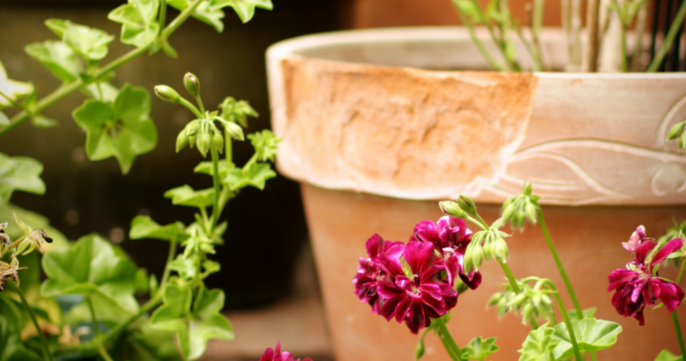 The Advantages and Disadvantages of Container Gardening