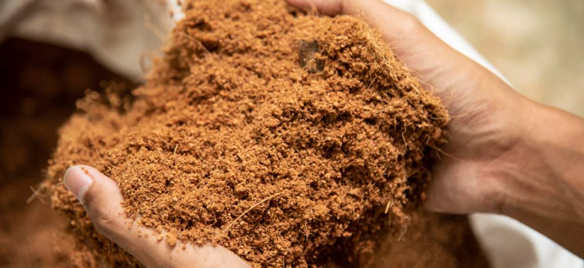 What is Coco Peat?