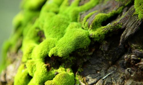 How to Create a Moss Terrarium