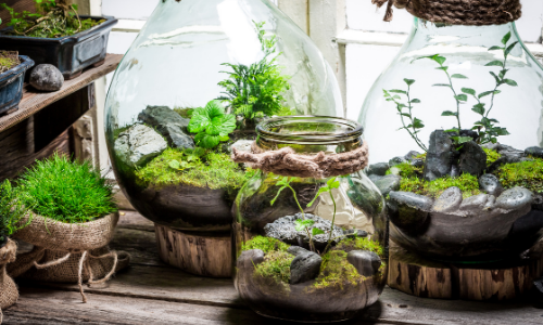 5 Types of Indoor Terrariums You Can Build Today