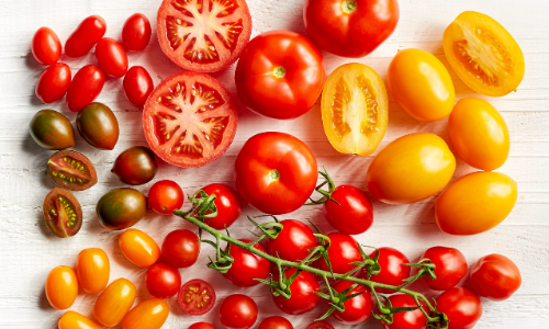 The Best Tomato Grow Bag Options