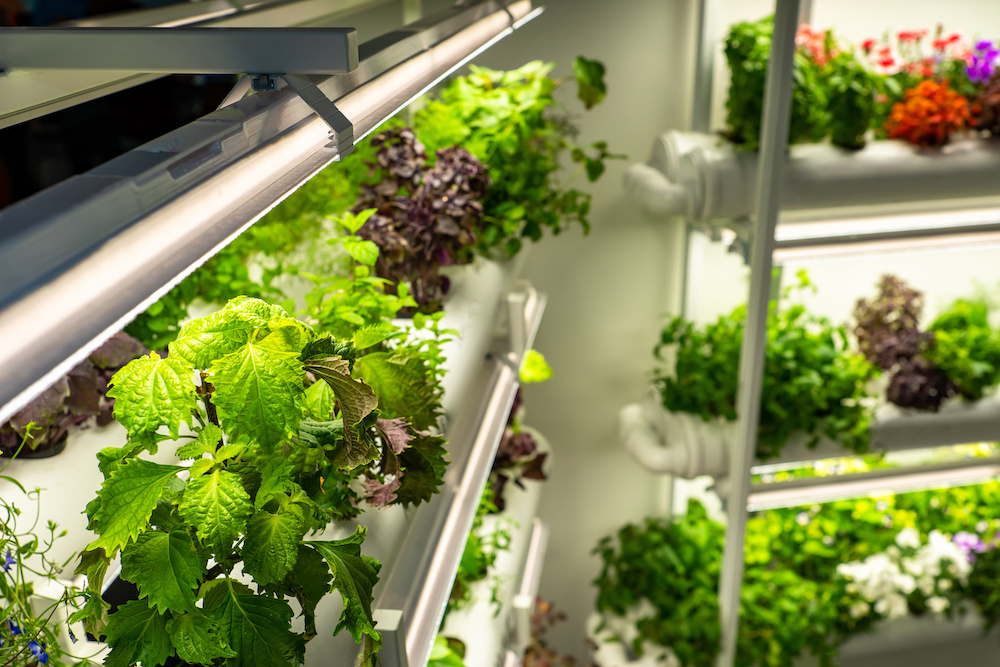 list of the best vegetables to grow indoors under lights