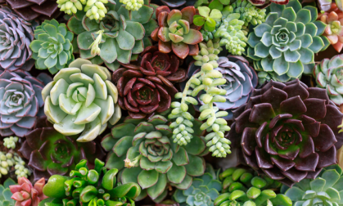 Propagating Succulents: A Complete Beginner's Guide