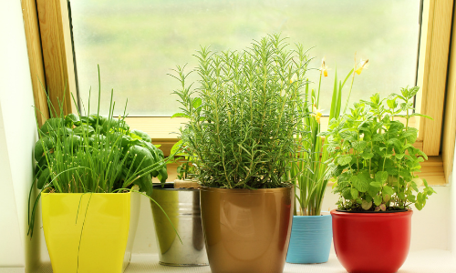 3 Ways to Get Started Growing Your Own Food Today