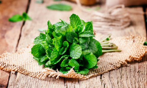The Ultimate Guide to Growing Mint at Home