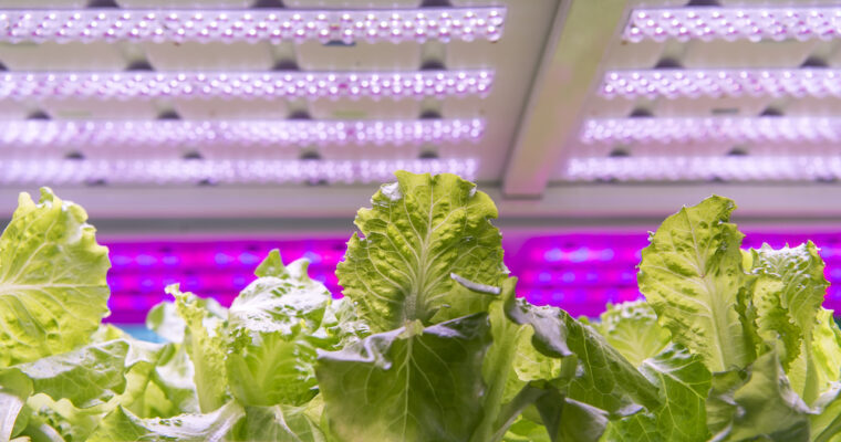What Color Light Do Plants Grow Best In: Definitions and Details