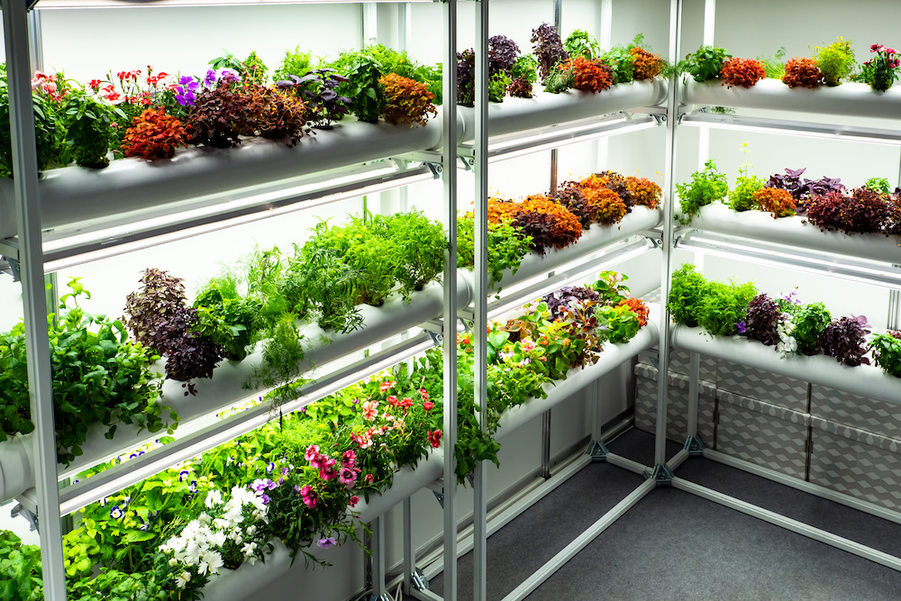 facts about what color light do plants grow best in