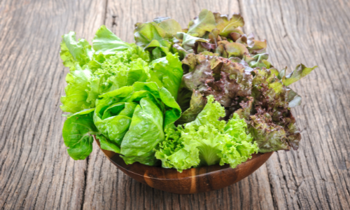 How Much Light does Lettuce Need to Grow?