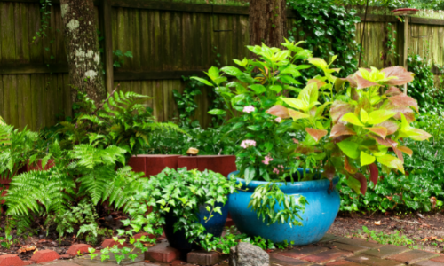 5 Things to Use for Container Gardening