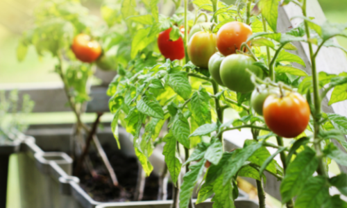 What Kind of Soil to Use in Container Gardening