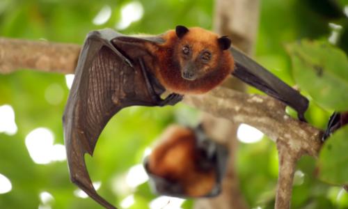 Do I need a Bat House? A Full Comparison of the Best Bat House Options