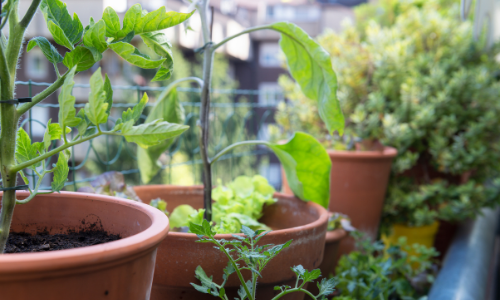 What to Grow on Balcony Gardens