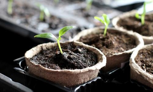 Do I need a Grow Light to Start Seeds Indoors?