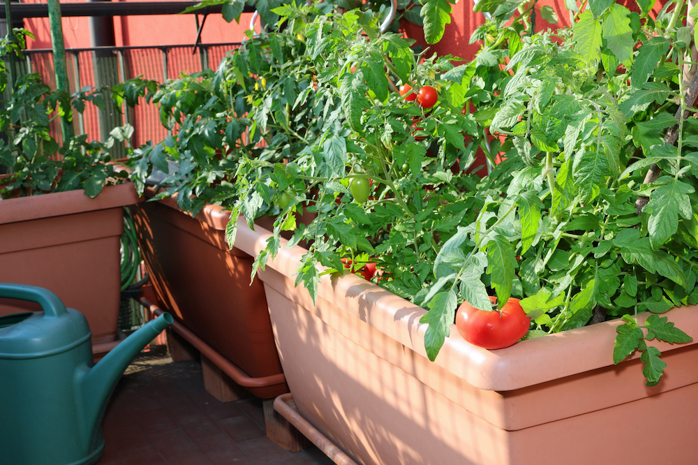 year round container gardening ideas for your home
