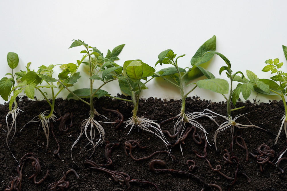 Earthworms in Container Gardening: The Essential Facts