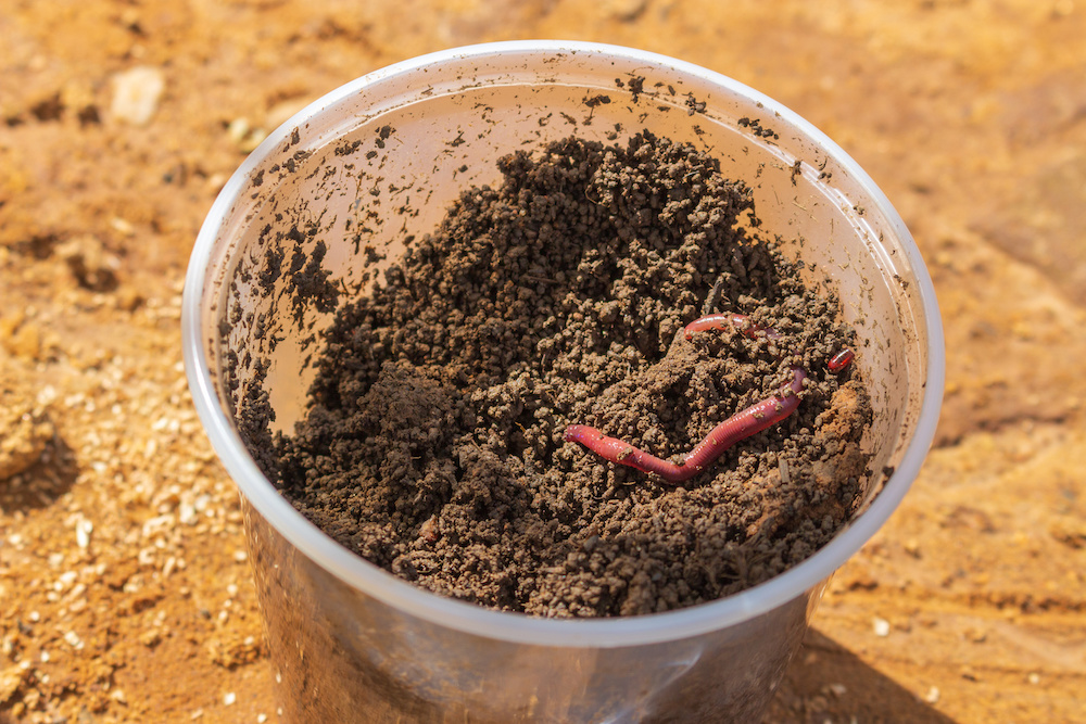 benefits of earthworms in container gardening