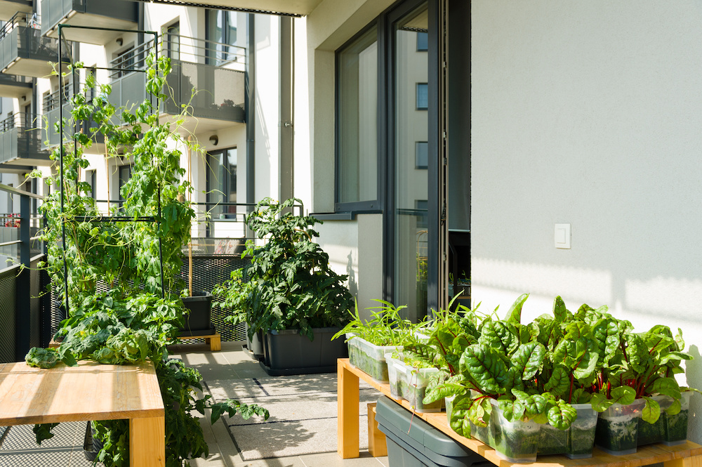 What Is Organic Container Gardening: A Helpful Guide