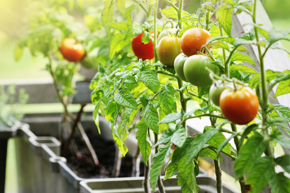what is organic container gardening