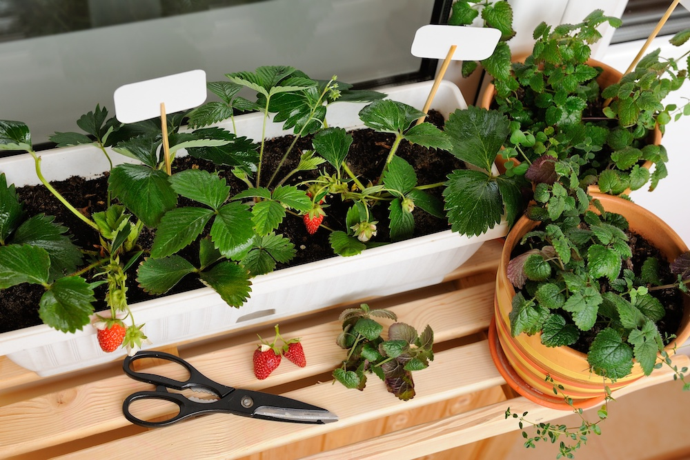 Year Round Container Gardening Ideas Perfect for Beginners