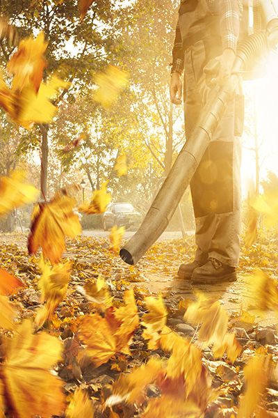 A person with a leaf blower is removing fallen leaves from the sidewalk. Golden leaves swirling around in warm sunshine. Bottom half of the person with no visible face.