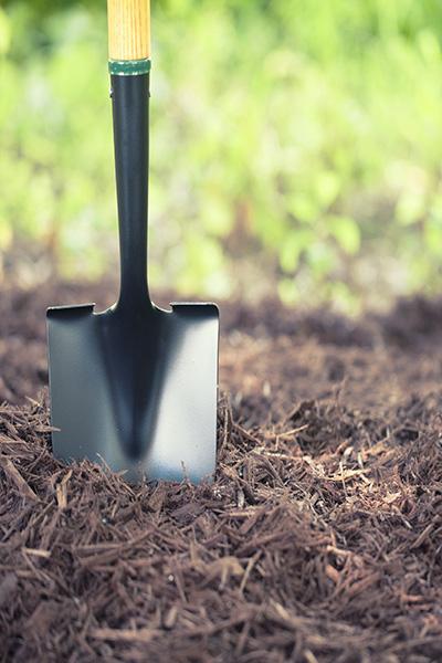 Shovel in the Mulch