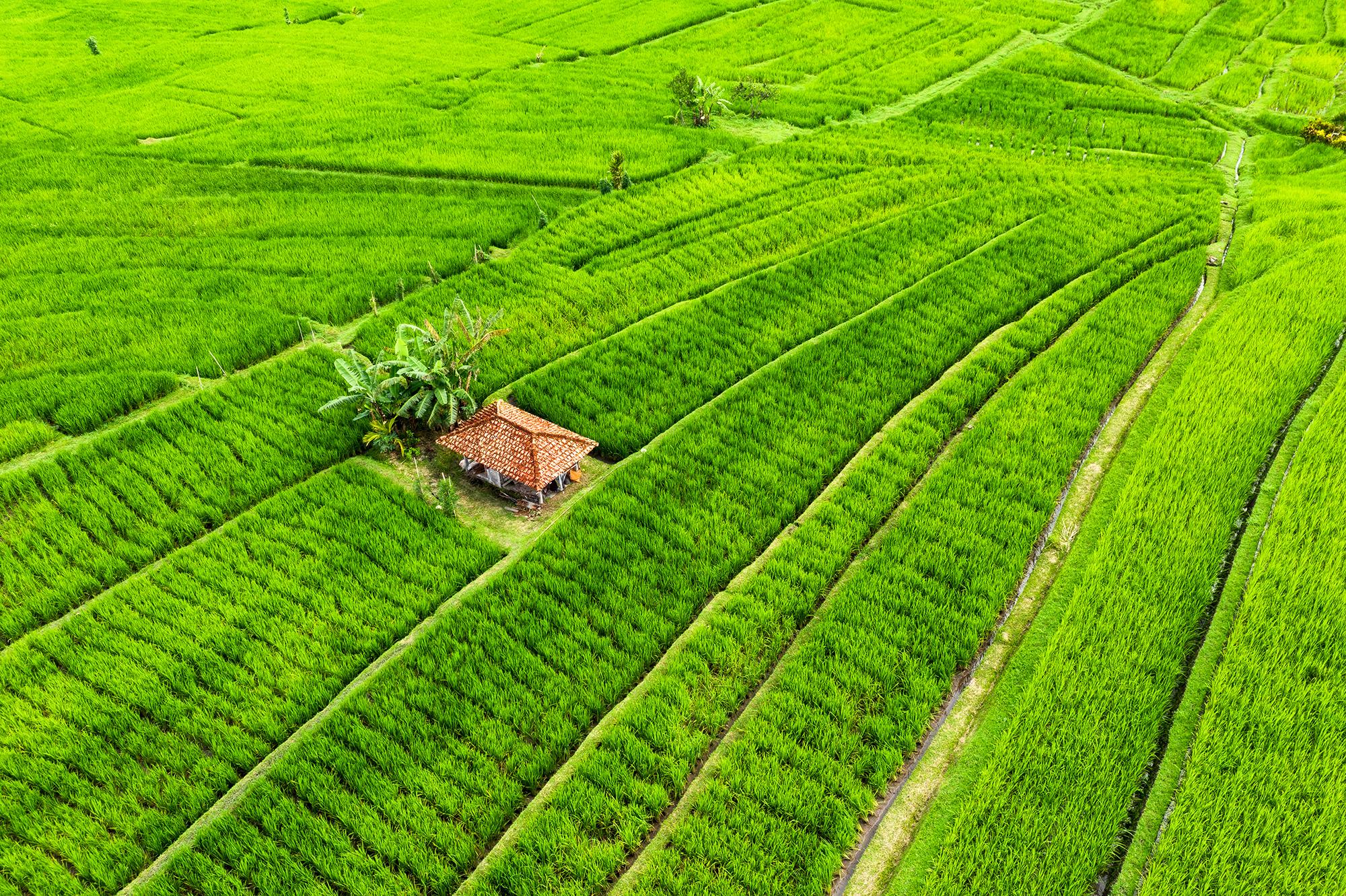Is THC Oil Legal? LeafDrop aerial of delta 8 grow farm