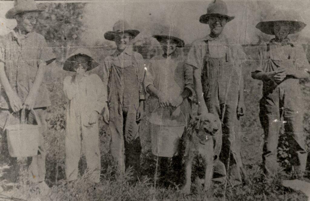 c. 1915 Picking potatoes: Charlie, Ara, Velan, Lorna, Waldo, Gaius, Old Gyp