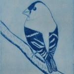 Finch (Solar Etching)