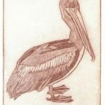 Pelican, Key West (Drypoint)