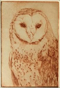 Barn Owl (drypoint)