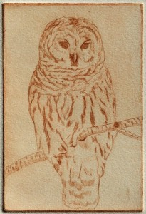 Barred Owl (drypoint)