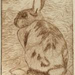 Bunny (drypoint)