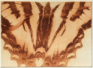 Butterfly (solar plate etching)