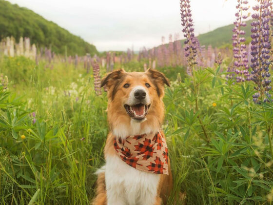 25 Canadian Pet Accounts You Need to Follow on Instagram Images of Canada