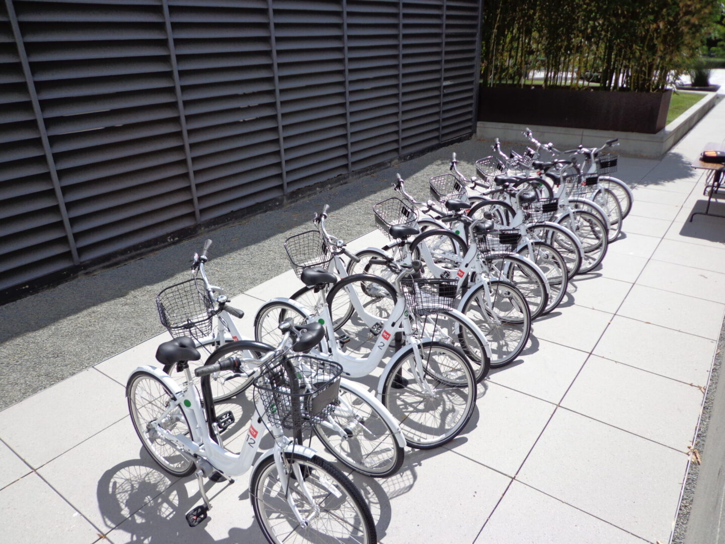A line of white bicycles