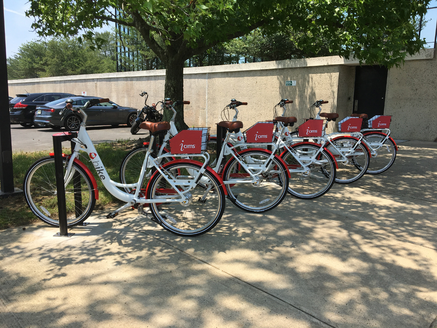 Five bicycles under the shade of a tree