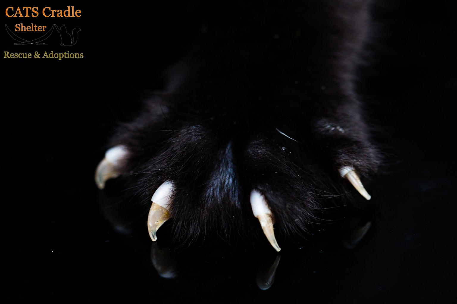 Please don't declaw